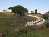 spionkop-mass-grave-site-1