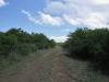 The-road-up-to-Mount-Alice-Spionkop-south-approach-1