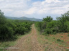 The-road-up-to-Mount-Alice-Spionkop-south-approach-11