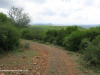 The-road-up-to-Mount-Alice-Spionkop-south-approach-8