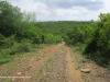 The-road-up-to-Mount-Alice-Spionkop-south-approach-9