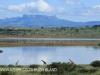 Spionkop Nature Reserve dam giraffe (7)