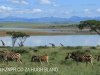 Spionkop Nature Reserve dam views zebraJPG (1)