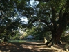 Stainbank Nature Reserve - Gardens (3)