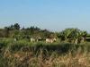 Stainbank Nature Reserve - Zebras