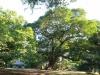 Stainbank Nature Reserve -  gardens (11)