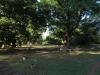 Stainbank Nature Reserve -  gardens (6)