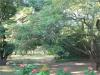Stainbank Nature Reserve -  gardens (7)