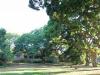 Stainbank Nature Reserve -  gardens (9)