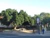 stanger-illembe-municipality-luthuli-statue-1898-to-1967-s-29-20-259-e-31-17-485-elev-78-m2-6