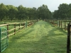 summerhill-paddocks-horses-5