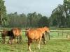 summerhill-paddocks-horses-7