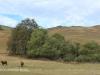 Swartberg Groenvlei Joyner Cemetery views (4)