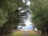 Swartberg Hlani Farm driveway (1)