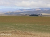 Swartberg Hlani Farm maize lands (2)