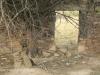 Swartberg Hlani Farm old derelict farmhouse (20)