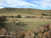 Swartberg Hlani Farm old derelict farmhouse stone kraals (5)