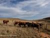 Swartberg Hlani Farm views of farm (3)