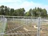 Swartberg Farmers Association sale yards (2)