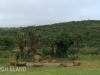 Tala Private Game Reserve - Fishermans Cottage  (7)