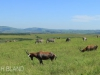 Tala Private Game Reserve - Landscapes -  (7)