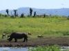 Tala Private Game Reserve -  White Rhino -  (2).JPG