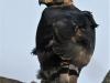 Tembe Elephant Park - Eagle