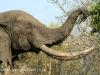 Tembe Elephant Park - Elephant (12)