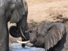 Tembe Elephant Park - Elephant (2)