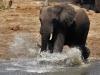 Tembe Elephant Park - Elephant (3)