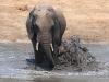 Tembe Elephant Park - Elephant (4)