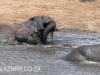 Tembe Elephant Park - Elephant (6)