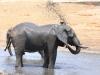 Tembe Elephant Park - Elephant (7 (1)