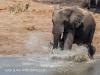 Tembe Elephant Park - Elephant (7 (2)