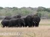 Tembe Elephant Park - Elephant (9)