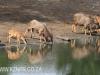Tembe Elephant Park - Nyala drinking (2)