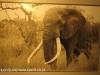 Tembe Elephant Park - Tusker Silo