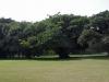 tongaat-maidstone-golf-club-s-29-32-667-e-31-07-957-elev-44m-2