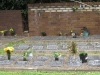 St Cyprians Anglican Church - Garden of Remeberance (1).