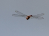 Umfolosi - Dragon Fly at hide (7)