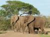 Umfolosi - Elephant (6)
