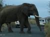 Umfolosi - Elephant bull (3)
