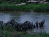 Umfolosi - Nqoyyeni lodge- elephant crossing river