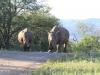 Umfolosi - White Rhino (17)