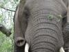 Umfolosi - elephant eating