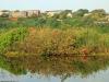 Illovo River Picnic site - S 30.06.396 E 30.50 (6)