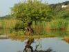 Illovo River Picnic site - S 30.06.396 E 30.50 (7)