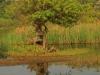 Illovo River Picnic site - S 30.06.396 E 30.50 (9)