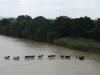 black-umfolozi-river-crossing-s-28-05-51-e-31-32-50-elev-221m-11