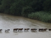 black-umfolozi-river-crossing-s-28-05-51-e-31-32-50-elev-221m-12